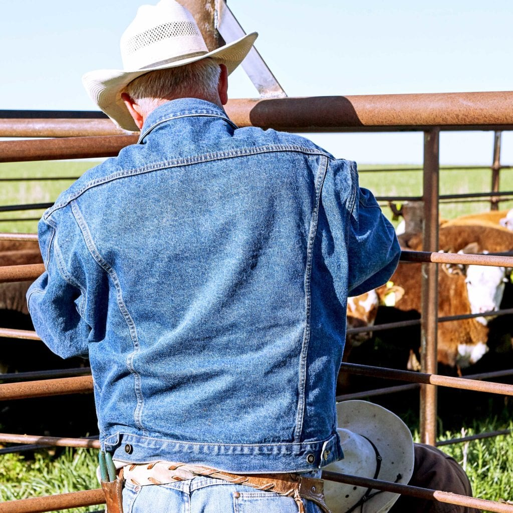 What Does Animal Handling Look like on the Farm & at the Livestock Auction