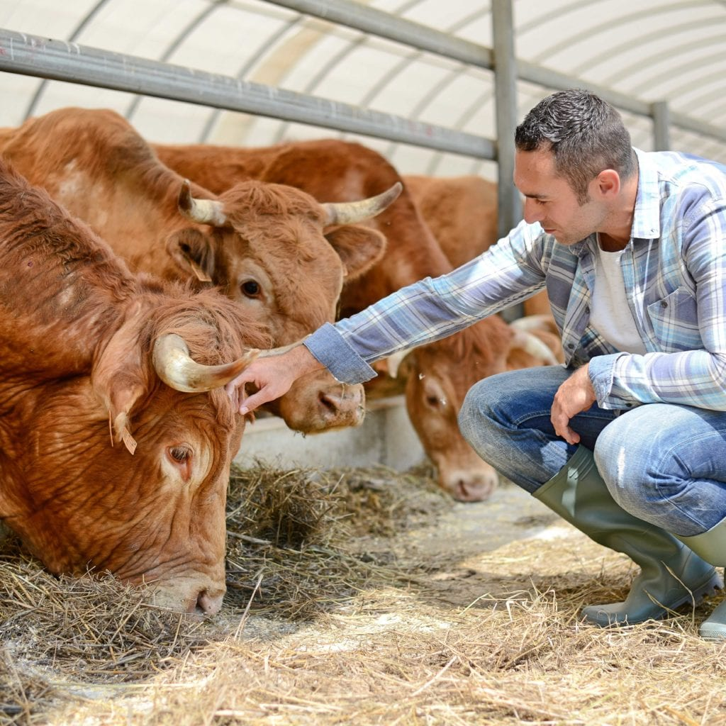 What is Beef Quality Assurance? - Beef Market Prices