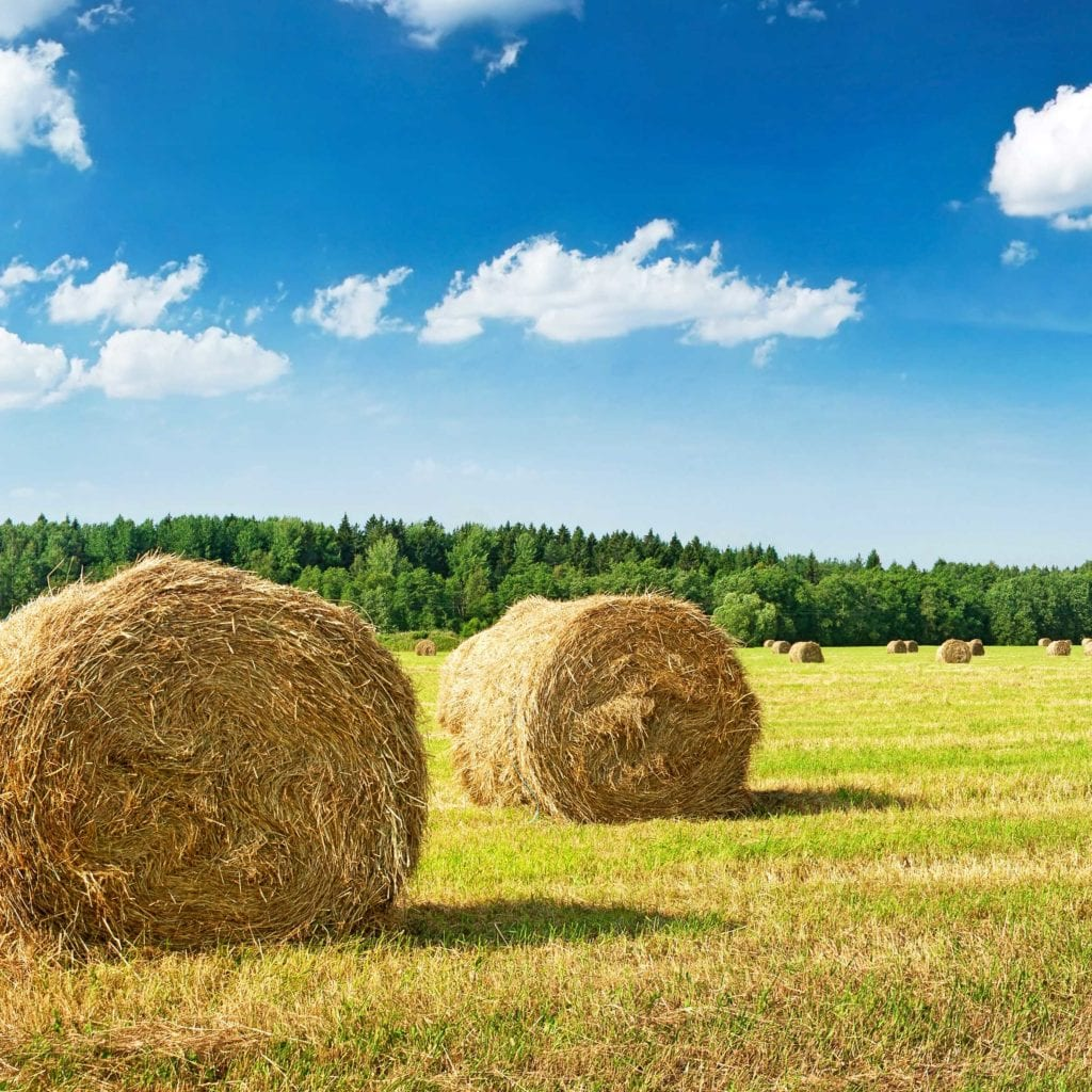 Common Questions During Hay Season - Cattlemen's Livestock Auction